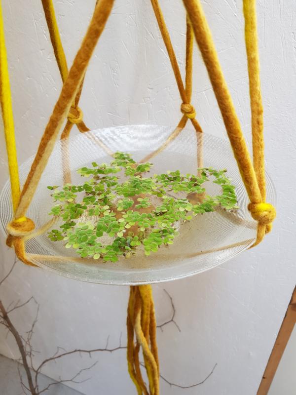 Plantenhanger van gevilt koord