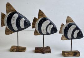 Zwart/witte discus vissen s/m/l