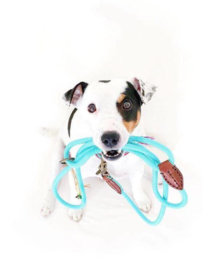 Dog leash turquoise