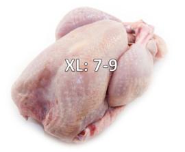 KALKOEN XL 7-9 KG