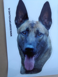 "Sticker colourr ""malinois"""