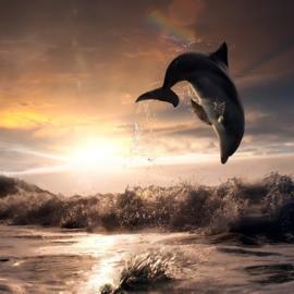 Dolfijn Awareness Auraspray