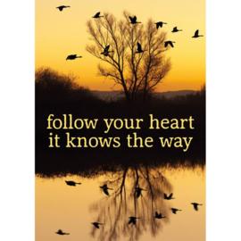 Ansichtkaart Follow your heart