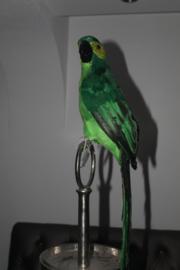 DECO PARROT BRAZIL H68 GREEN