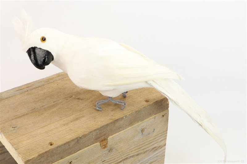 DECO PARROT BRAZIL H50 WHITE