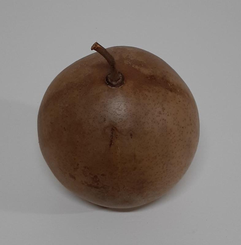 BALLON FRUIT BRUIN