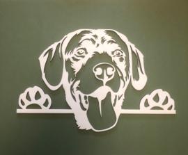 Labrador met pootjes