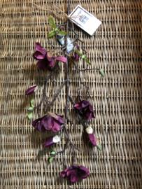 """Bloem """"Magnolia Purple H 76 cm"""
