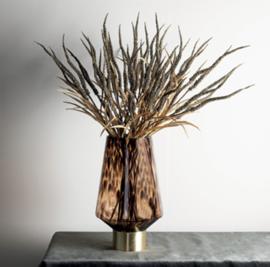 Twig plant brown dried wheat spray
