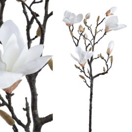 PTMD Magnolia Bloem Wit tak lang met knoppen