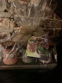 WoodWick Gift Set