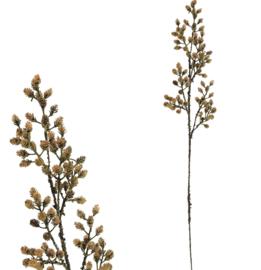 twig plant pine cone