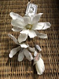 """Bloem """"Magnolia Cream Snow H 60 cm"""