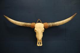 XXL longhorn schedel