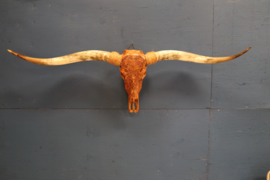 SPECIAL EDITION Longhorn
