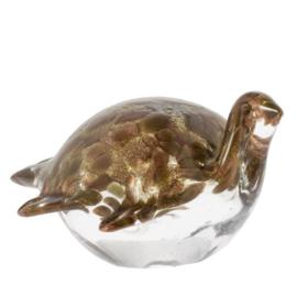 Schildpad Sidney Bruin