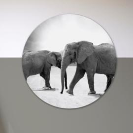 Olifanten - wandcirkel