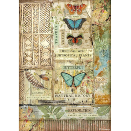 Stamperia - Amazonia Butterfly A4