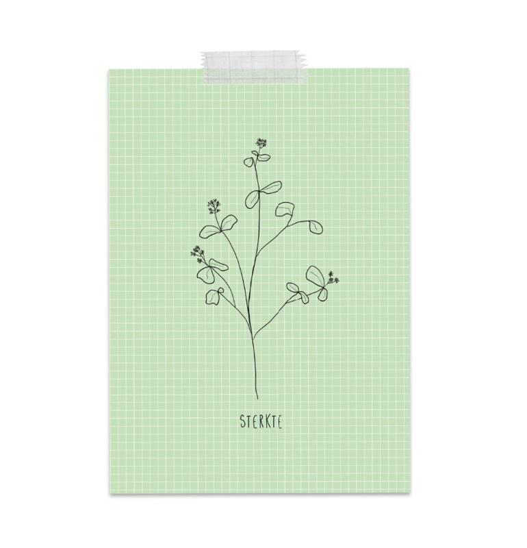 sterkte leafs