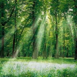 Geurolie - Mystic Forest