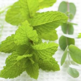 Geurolie - Fresh Mint