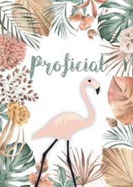 Flamingo proficiat