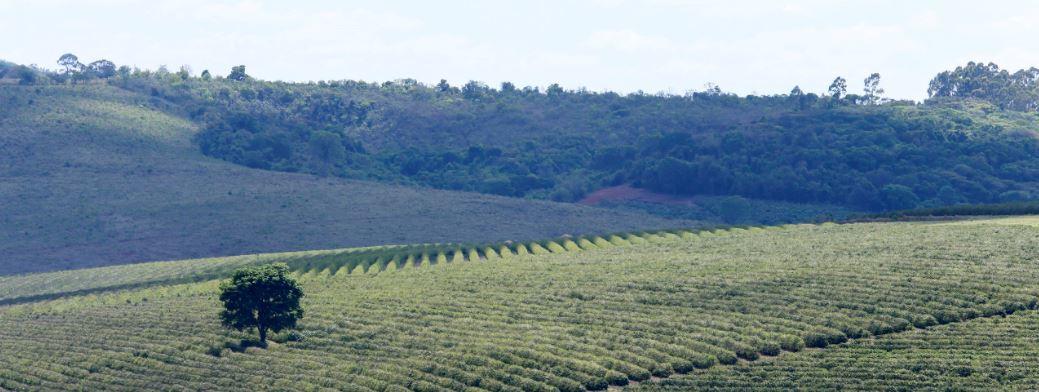 Koffieplantage in Brazilie