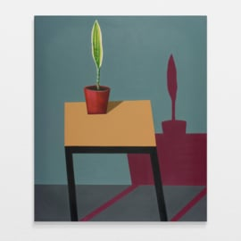 'Still life with sansevieria' - P. Colstee