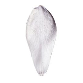 SK Great Impressions Petal Veiner Magnolia VL [GM05M001-01]