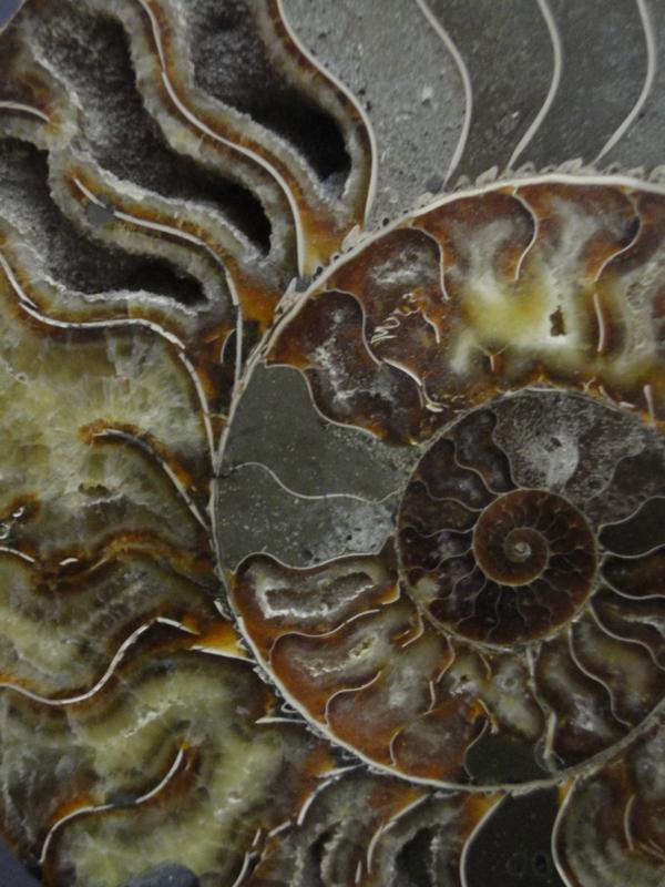 Ammoniet fosiellen paar