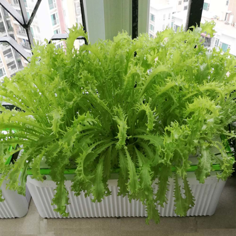 Smart Garden Large + Hydroponic Systeem + Tralley Scherm Click & Grow