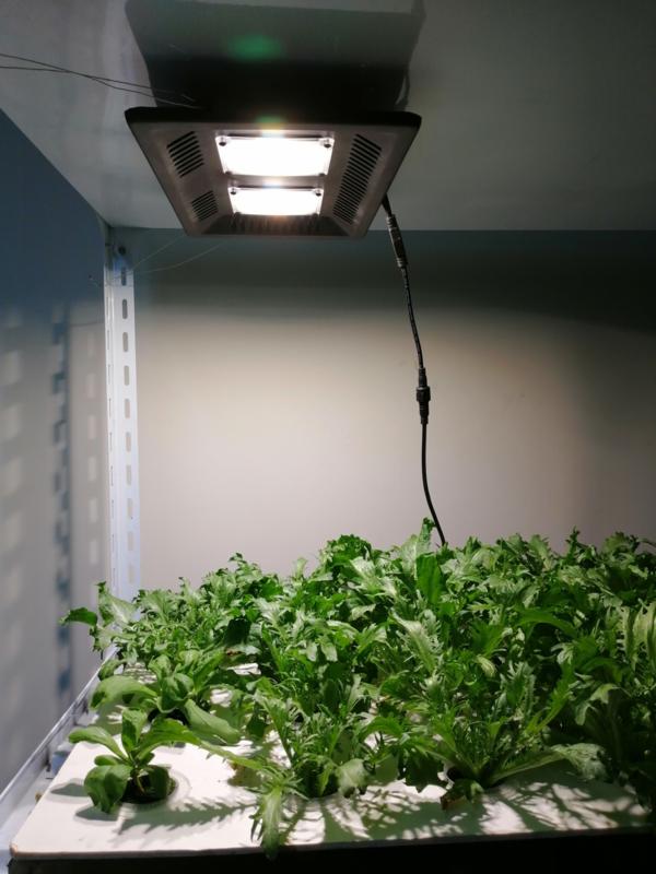 Groeilamp Zonlicht Wit - Growlight Sun Light LED 300 Watt