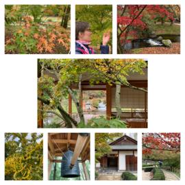 Japanse tuin in België