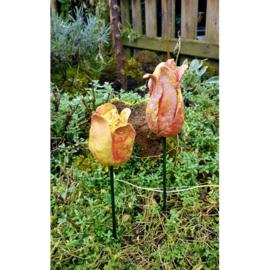 Paverpol Tulpen