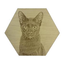 Hexagon Kat