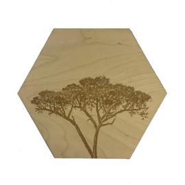 Hexagon Afrikaanse boom