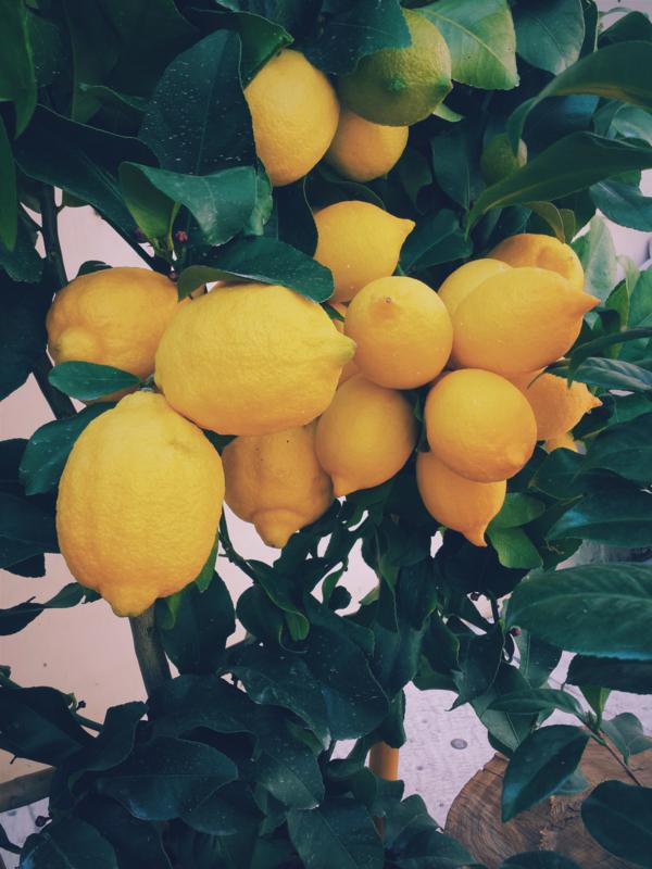 Citroen essentiële olie - Fragrance of Life - Citrus limon - 10 ml.