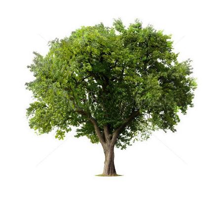 Doneer 1 of meer bomen