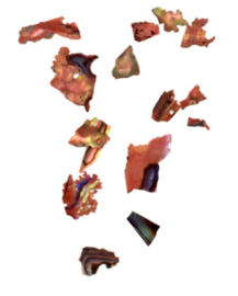 Abalones 9
