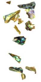 Abalones 7