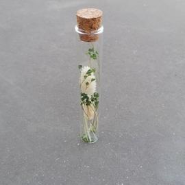 droogbloemen in glazen buisje, groen