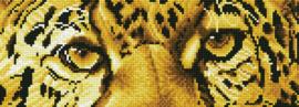 leopard spy