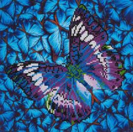 flutter by mauve
