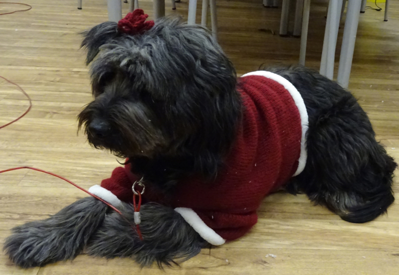 Cursus honden katten kleertjes, mandjes, draagzakken en dieren sieraden maken