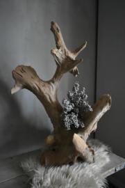 Hardhouten stronk