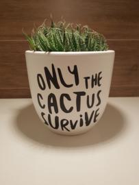 Plantenpot cactus