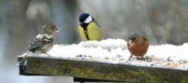 Strooivoer Mix voor de kleine vogels 1kg