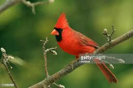 Deli Nature 45 Cardinal mix 15kg