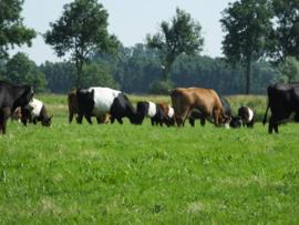 Biologisch graszaad mengsel 2; 6 grassoorten en 3 klaversoorten, geschikt voor alle bodemtypen.
