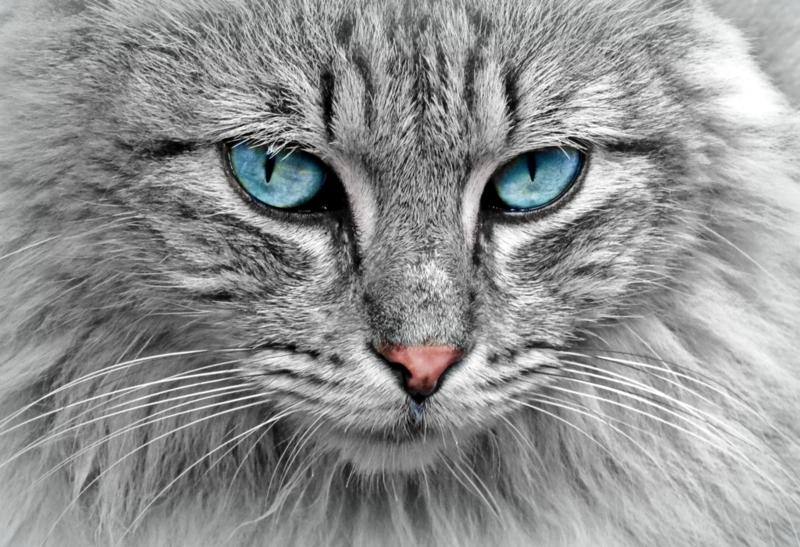 Nieuwsbrief 4. Variatie voor katten en honden   Kortingscode